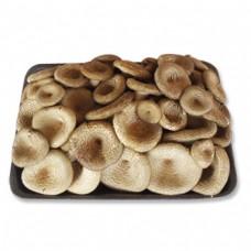 Fossil Mushroom / Kradang Mushroom 100g