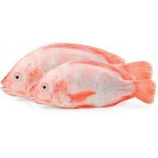 Kimson - Red Tilapia 500g-800g